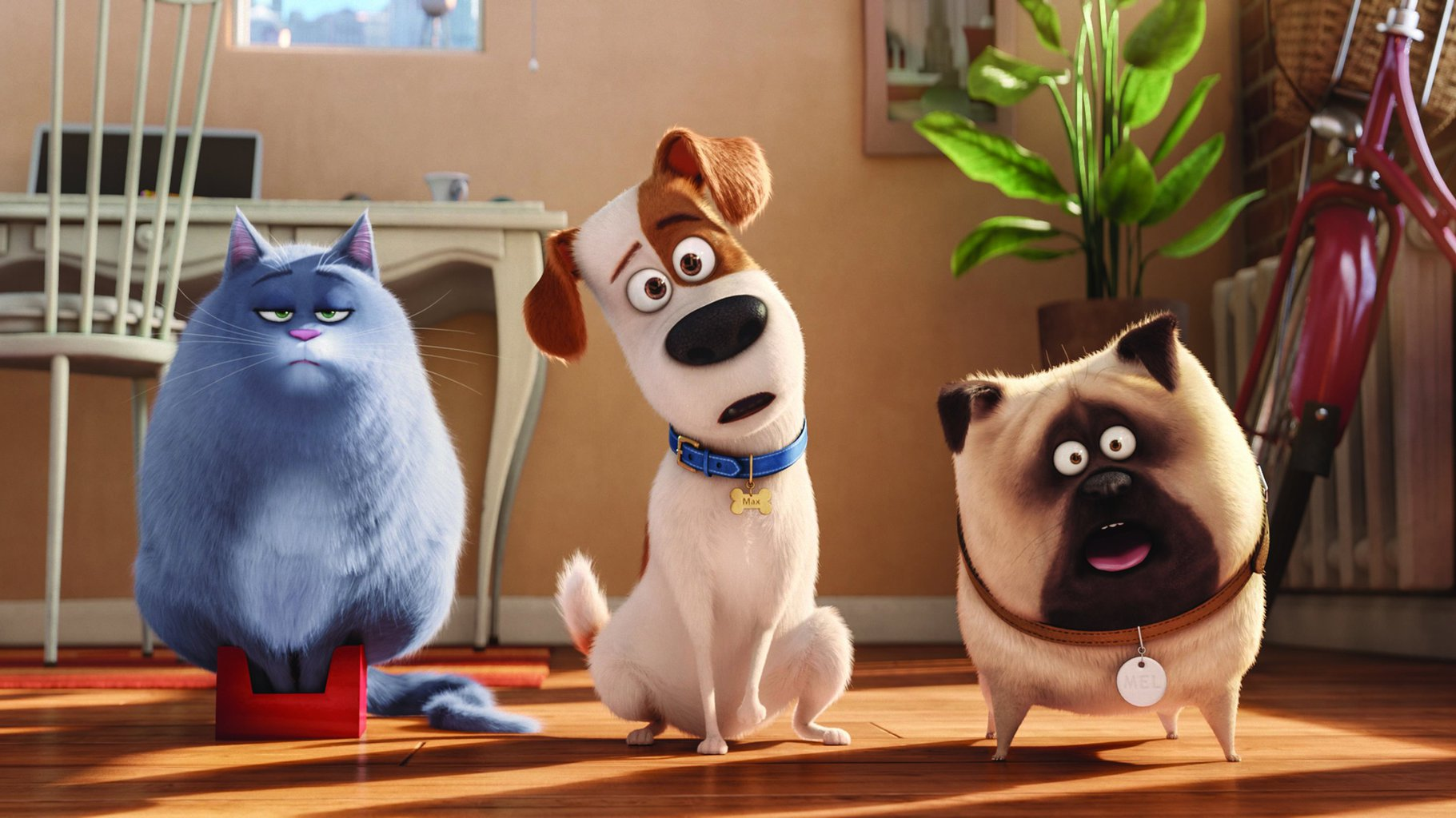 grumpy cat and two curious dogs