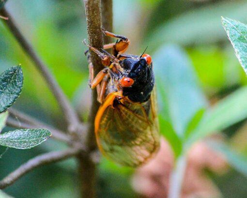 A cicada sitting on a branch